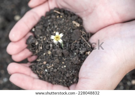 Hands holding soil with flower shooting out - stock photo