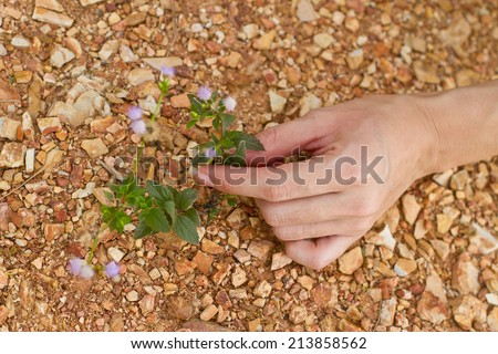hands holding tree growing on cracked earth - stock photo