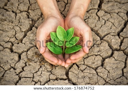 hands holding tree growing on cracked earth /hands growing tree / save the world / environmental problems / love nature / heal the world / cut tree /  growing tree on crack ground / love tree
