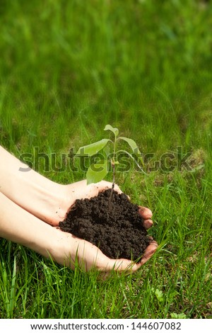 Hands holding young green plant, on grass background - stock photo