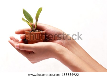 Hands holding young plant in clay pot. - stock photo