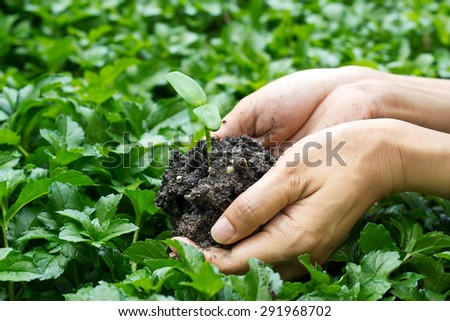 hands holding young plant on green nature background, seeding plant - stock photo