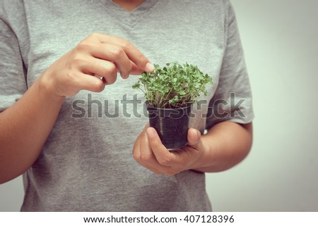 hands holding young plant with filter effect retro vintage style