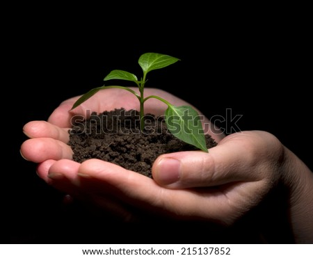 Hands holdings a little green plant on a black background - stock photo