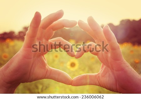 Hands making heart symbol in a field of sunflowers.  Instagram effect - stock photo