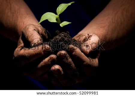 hands of a farmer holds the budding plant of new growth