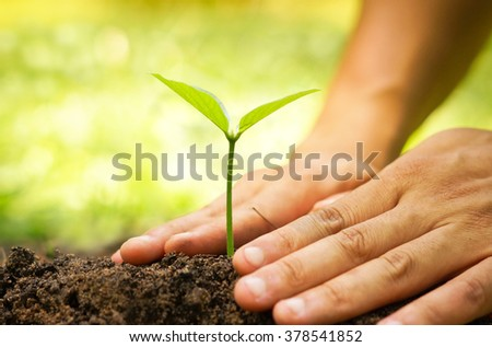 Hands of farmer growing and nurturing tree growing on fertile soil with green and yellow bokeh background / nurturing baby plant / protect nature - stock photo