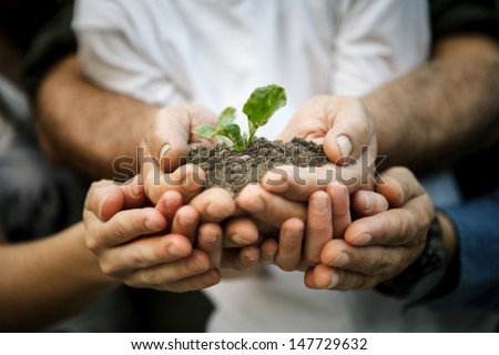 Hands of farmers family holding a young plant in hands - stock photo