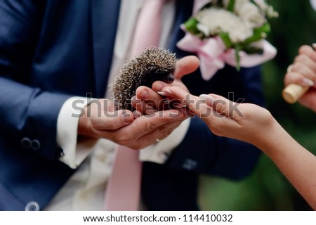 hands of the bride and groom hold a small prickly hedgehog - stock photo