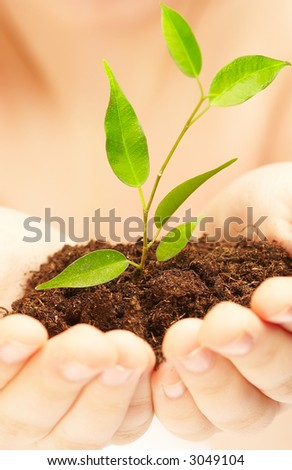 Hands of the child with a young plant. - stock photo
