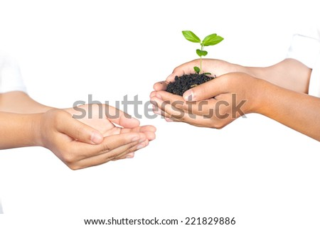 Hands of woman holding and taking a young plant isolated on over white. Ecology concept - stock photo