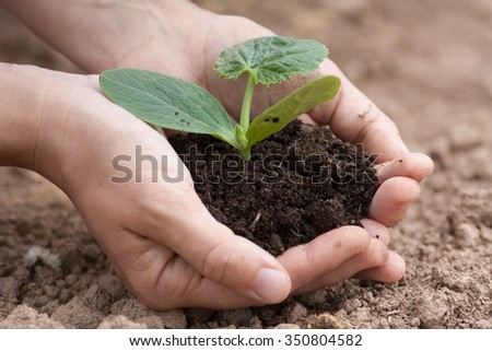 hands of woman holding seedling with fertile soil - stock photo