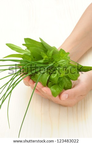 Hands of young woman holding fresh herbs, basil, chive, sage