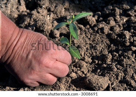 hands, palm, land, agriculture