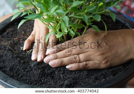 Hands planting.
