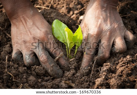 hands planting a seedling into soil - stock photo