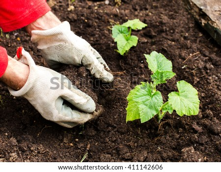 hands planting newborn plant in the ground