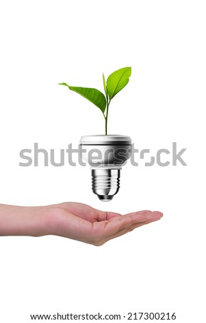 Hands protecting green tree in light bulb, isolated on white, with clipping path