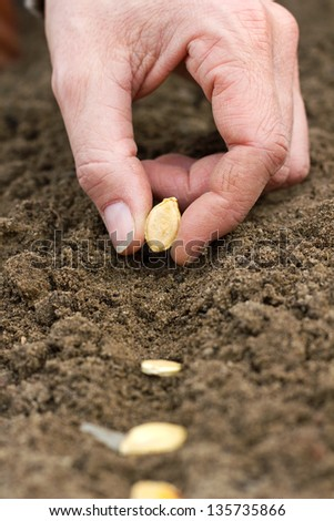 hands seeding seed in garden soil/gardening/seeding