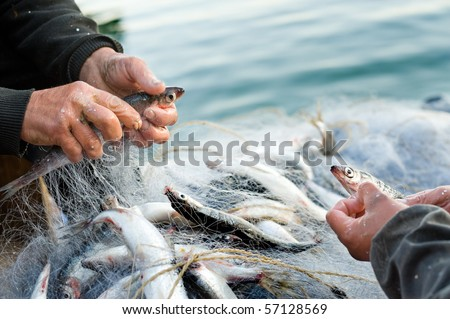 hands take fish out of a net - stock photo