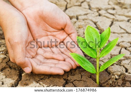 hands watering a tree on cracked earth / love nature / love tree / save the world / heal the earth / environmental destruction / growing tree / plantation - stock photo