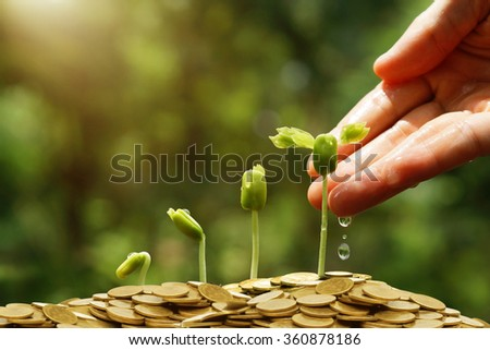 Hands watering young baby plants growing in germination sequence on golden coins / Green business concept  - stock photo