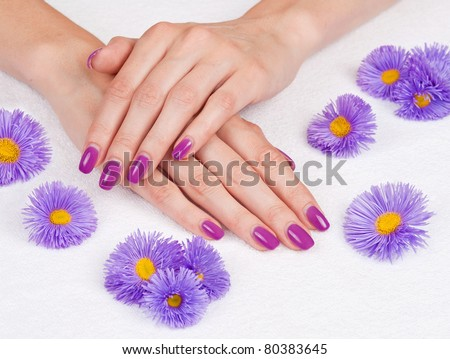 Hands with manicure and purple daisies - stock photo