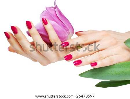 Hands with pink manicure holding tulip isolated on white background - stock photo