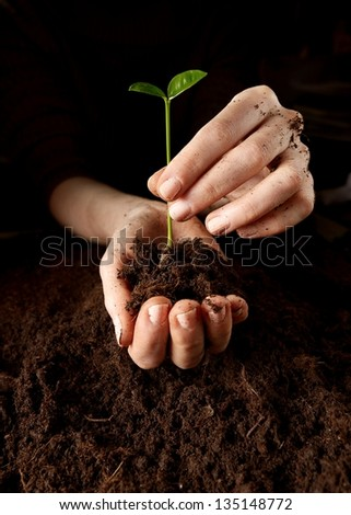 Hands with plant - stock photo