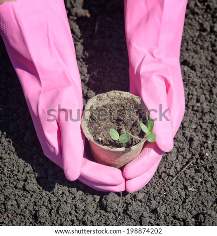 Hands with plant in the garden - stock photo
