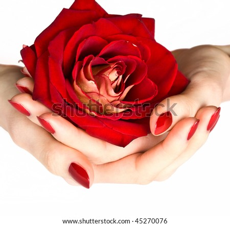 Hands with red manicure holding delicate rose close-up isolated on white - stock photo