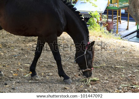 Handsome black horse is under the tree. - stock photo