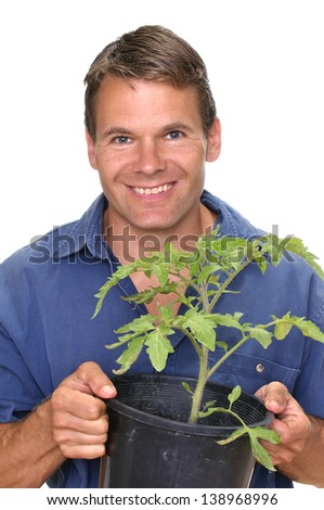 Handsome Caucasian male nursery worker smiles at camera while carrying a potted tomato plant with white background