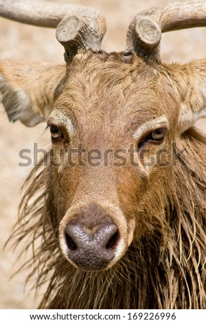 Handsome deer - stock photo