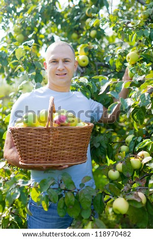 Handsome guy with basket of harvested apples in sunny garden - stock photo