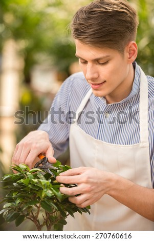 Handsome male florist pruning a plant in the greenhouse. - stock photo