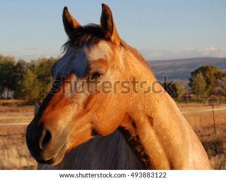 Handsome Maverick horse portrait