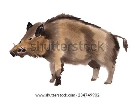 Handwork watercolor illustration of a boar - stock photo