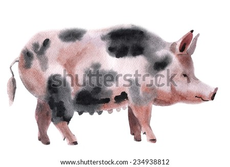 Handwork watercolor illustration of a pig - stock photo