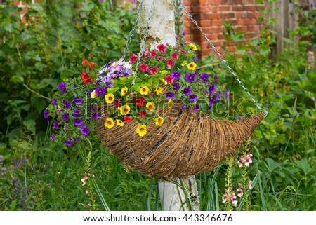Hanging basket with plenty of petunia blossoms in the summer Garden.