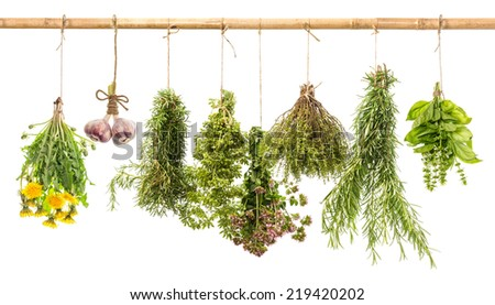 hanging bunches of fresh spicy herbs isolated on white background. rosemary, basil, thyme, oregano, marjoram, garlic, dandelion. herbal medicine - stock photo