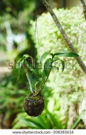 Hanging Garden. A flower coconut pot, hanging on bench in the park. Contrast of green colors. Vertical format photography, nobody in sight. - stock photo