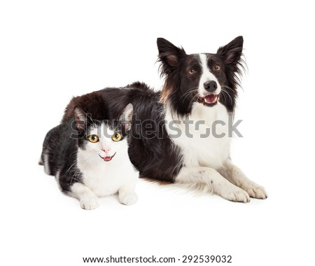 Happy and smiling black and white cat and dog laying together - stock photo
