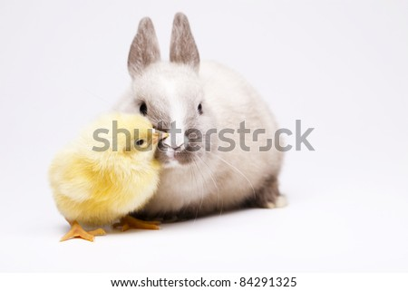Happy animal, Bunny and chick - stock photo