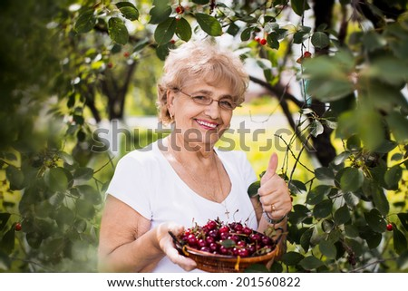 happy beautiful senior woman holding cherries and showing her thumb up in the garden - stock photo