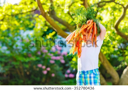 Happy blond little kid boy with carrots in domestic garden. Child gardening and eating outdoors. Healthy organic vegetables as snack for kids and kindergarten children - stock photo