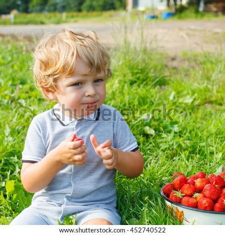 Happy blond little toddler kid boy picking and eating strawberries on organic pick a berry farm in summer, on warm sunny day. Harvest fields. Healthy food for children. Gardening and farming concept - stock photo