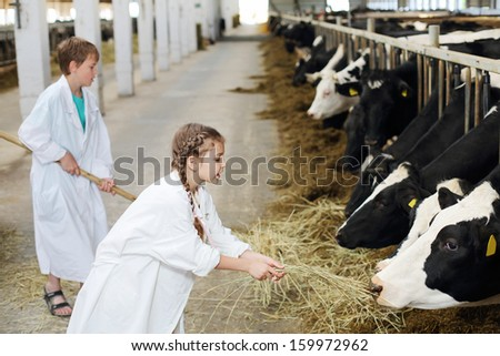 Happy boy with hayfork and girl in white robe give hay to cows at large farm. Focus on girl. - stock photo