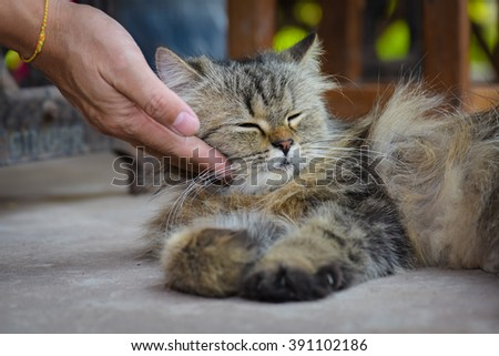 Happy cat is pleased with hand stroking.
