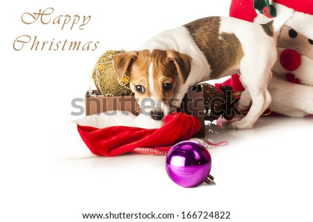 Happy Christmas card: Cute Jack Russell Terrier puppy playing with red Santa hat isolated on white background - stock photo